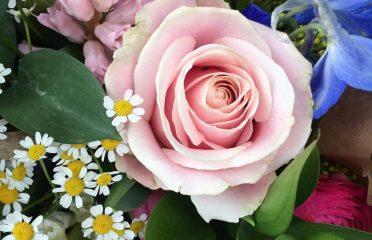 Blooming Desires